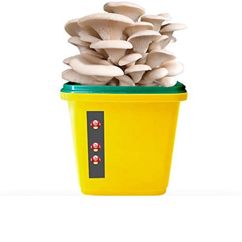 Rowe Kit de Crecimiento de Hongos mágicos Interior Reutilizable, Oster Oyster Mushrooms Mycelium Spawn Spores Bag Kit Completo, Kits de jardinería Interior fantásticos (Color : Yellow)