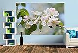 Premium Foto-Tapete Apfelblüte (versch. Größen) (Size M | 279 x 186 cm) Design-Tapete, Wand-Tapete, Wand-Dekoration, Photo-Tapete, Markenqualität von ERFURT