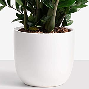 PEACH & PEBBLE Ceramic Planter (12″, 10″, or 7″) – Large Plant Pot, Hand Glazed Indoor Flower Pot for All House Plants (12 inch, White)