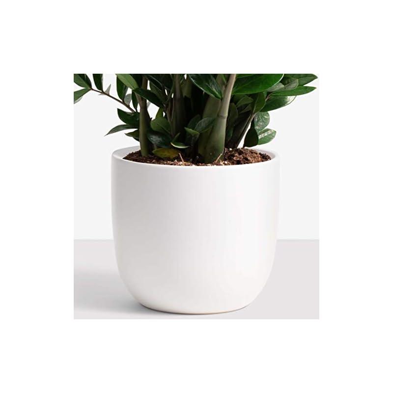 "silk flower arrangements peach & pebble ceramic planter (12"", 10"", or 7"") - large plant pot, hand glazed indoor flower pot for all house plants (12 inch, white)"