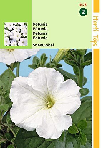 2 stuks Petunia Hybr.Nana Comp. Sneeuwbal