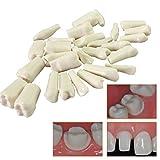 LBYLYH Modelo de anatomía de los Dientes - Modelo Dental Dental - 28 Modelos de Dientes Modelos dentales - para educación y Modelo de Dientes de demostración