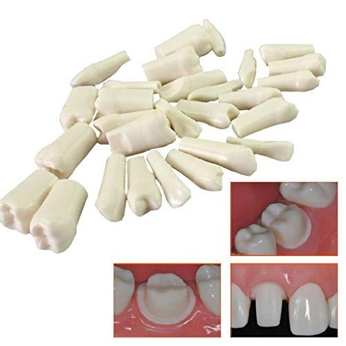 ALBB Modelo de dientes dentales, 28 dientes de la odontología oral simulada modelo de dientes para la educación, modelo de diente de demostración para el paciente, Educación de los niños,