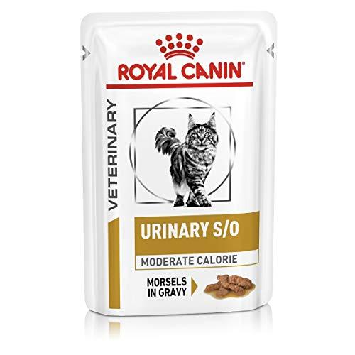 ROYAL CANIN Alimenti 12 x 85 G