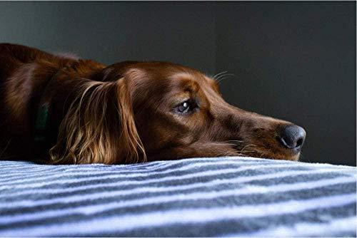 LLYMGX 1000 Stück Kurzmantel Brauner Hund Für Erwachsene Puzzlesets Für Familien Holzpuzzlespiele Lernspiele Brain Challenge Puzzle Für Kinder Kinder