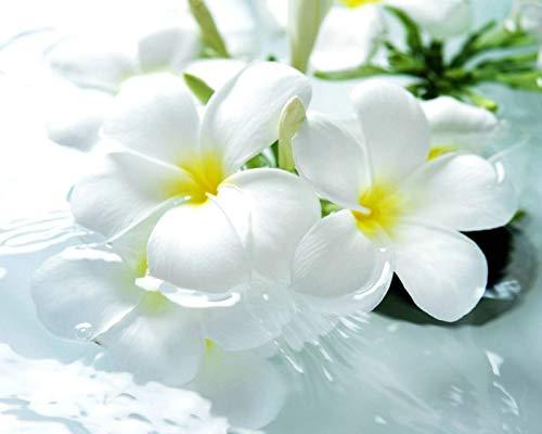 Rompecabezas De 1000 Piezas Para Adultos Flores Blancas Montaje De Madera Decoración Para El Hogar Juego De Juguetes Juguete Educativo Para Niños Y Adultos Regalos