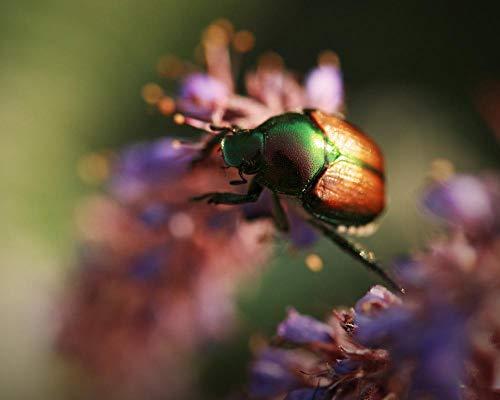 Rompecabezas de 1000 piezas para adultos, colorido escarabajo insecto, rompecabezas de 1000 piezas para adultos