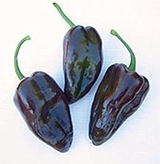 Mulato Isleno Peppers Seeds (80 Seed Pack)