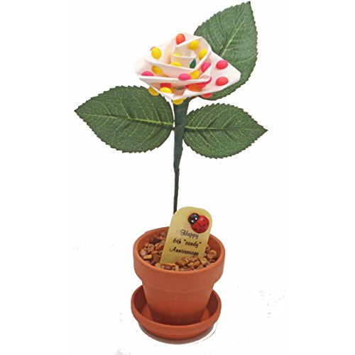 6th Year Wedding Anniversary Gift, Potted Candy Desk Rose, Perfect Present for Wife or Husband