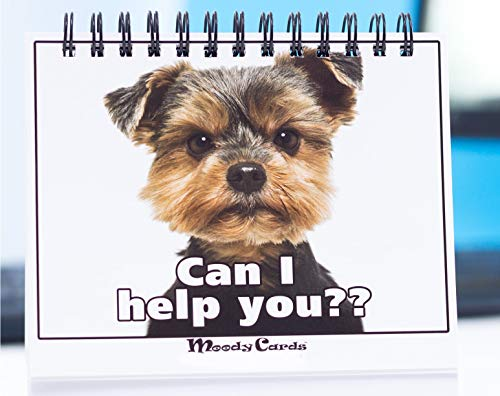 Office Gift for Dog Lovers - Moodycards! Make Everyone Laugh with These Adorable and Hilarious Dog Memes - Let The Dogs Tell Everyone How You Feel! A Terrific Office Gift! 25 Different Moods