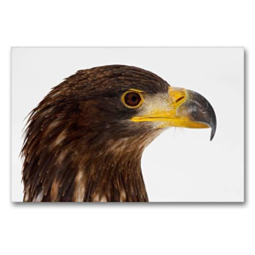 Premium Textil-Leinwand 90 x 60 cm Quer-Format Seeadler - Haliaeetus albicilla | Wandbild, HD-Bild auf Keilrahmen, Fertigbild auf hochwertigem Vlies, Leinwanddruck von Dirk Grasse
