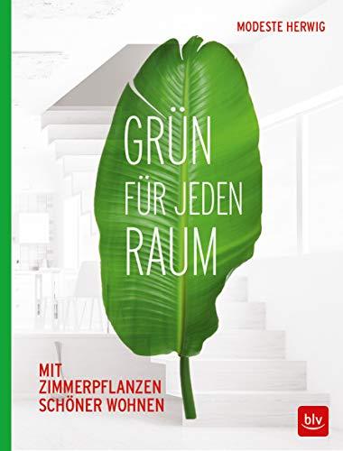 Grün für jeden Raum: Mit Zimmerpflanzen schöner wohnen