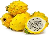 Kejora Fresh Yellow Dragon Fruit (Set of 8) - USDA Organic