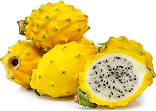 Kejora Fresh Yellow Dragon Fruit Set of 8  USDA Organic