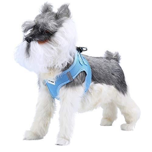 Pettom Hundegeschirr für Katzen, Luftweste, ausbruchsicher, atmungsaktiv, weich, reflektierender Riemen, Metallclip, Kätzchen, Welpen, Kaninchen (XL, blau)