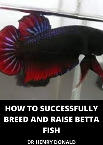 HOW TO SUCCESSFULLY BREED AND RAISE BETTA FISH