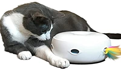 PetFusion Ambush Interactive Cat Toy with Electronic Rotating Feather. (Smart Modes, Nighttime Light, Batteries Included) … from PetFusion