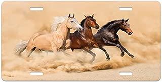 Lunarable Horses License Plate, 3 Horse Running in Desert Storm Mythical Mystic Messenger Animals Habitat Print, High Gloss Aluminum Novelty Plate, 5.88