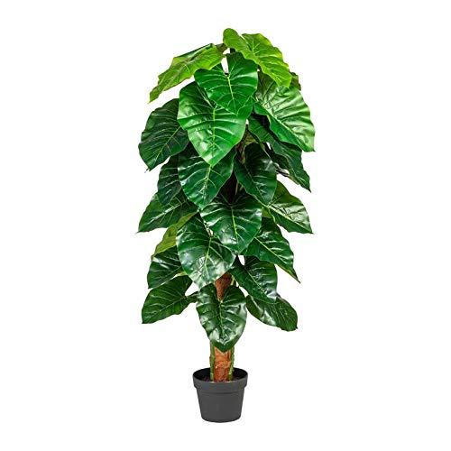 Pflanzen Kölle Anthuriumpflanze, grün, ca. 120 cm, am Cocosstamm, dekorativ