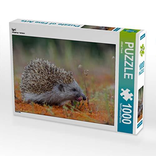 CALVENDO Puzzle Igel 1000 Teile Lege-Größe 64 x 48 cm Foto-Puzzle Bild von Alfred Trunk