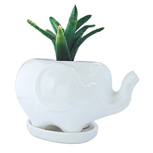 White Elephant Gift Elephant Planter with Saucer Tray. Elephant Gifts, Fits Small Succulent/Flower. Elephant Decor for Home/Office (Elephant, White)