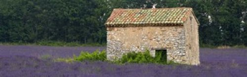 Posterazzi Stone building in a lavender field Provence-Alpes-Cote D'Azur France Poster Print, (36 x 12)