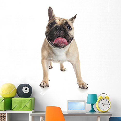 Wallmonkeys French Bulldog White Wall Decal Peel and Stick Graphic (60 in H x 42 in W) WM359393