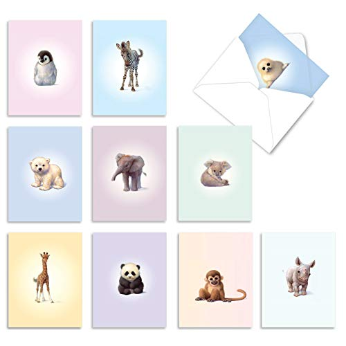 The Best Card Company, Zoo Babies - 10 Thank You Cards Boxed (4 x 5.12 Inch) - Animal Baby Thank Yous with Envelopes M6726TYG