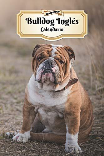 2020 Bulldog Inglés Calendario: 107 Páginas | Tamaño A5 | Planificador Semanal | 12 Meses | 1 Semana en 2 Páginas | Agenda Semana Vista | Tapa Blanda | Perro