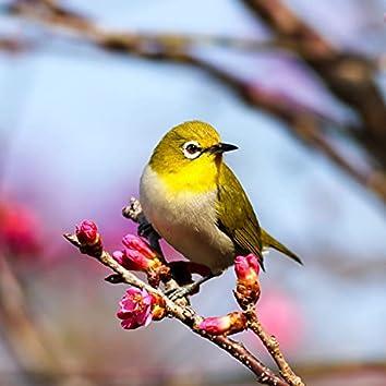 Meditation: Sweet Birds Chirping, Bird Sounds