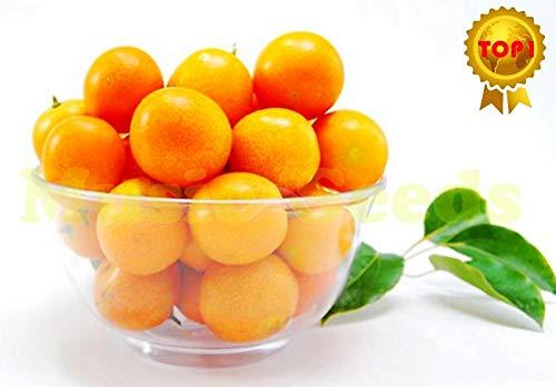 AGROBITS 1bag = 20pcs Vente JAPONAIS mini-orange, graines kumquat Cumquat Bonsai Tomate cerise fruits bio Graines Accueil & amp; Jardin