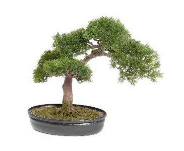 Bonsai Ceder, ca. 225 Blätter und Schale, 40cm – Kunstbonsai künstlicher Bonsai