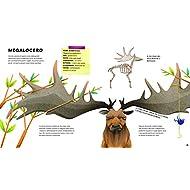 Lo-straordinario-catalogo-degli-animali-estinti