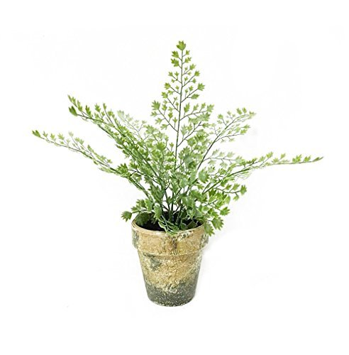 Artificial Caulerpa taxifolia in Gray Ceramic Pot Artificial Plant for Home Decor