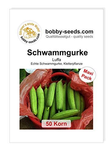 Luffa cylindrica Schwammgurke von Bobby-Seeds 50 Korn