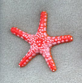 Collectible Wildlife Gifts Sea Star Starfish Necklace 2 1/4-inch Plastic - F928 B158