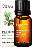 Aceite esencial de pino orgánico de Gya Labs para aliviar el dolor y concentrarse, relajar y limpiar el ambientador - 100% puro grado terapéutico natural para aromaterapia - 10 ml