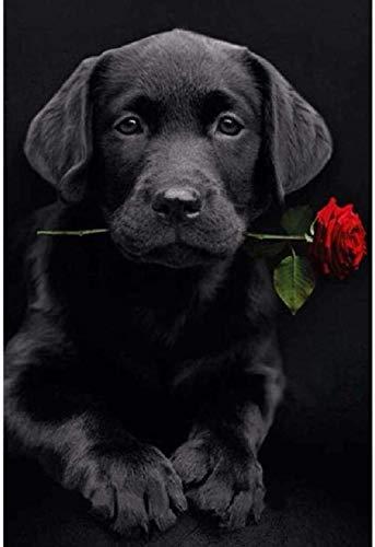 Puzzle Adultos 1000 Piezas Labrador negro mordiendo una rosa Niños Juguete Puzzles 75×50cm