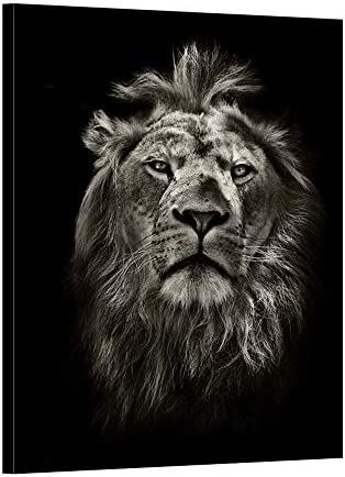 iKNOW FOTO Graphic Black and White Lion Portrait Canvas Prints Wall Art Stretched Wood Frame product image