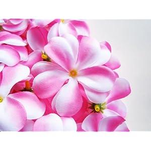 (12) Pink White Hawaiian Plumeria Frangipani Silk Flower Heads – 3″ – Artificial Flowers Head Fabric Floral Supplies Wholesale Lot for Wedding Flowers Accessories Make Bridal Hair Clips Headbands Dress