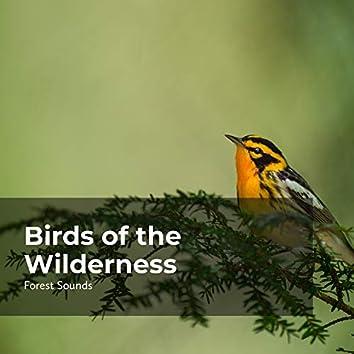 Birds of the Wilderness