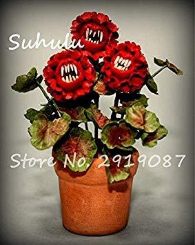Vistaric 100pcs Rare Mini Geranium Graines Vivaces Belles Fleurs Graines Pelargonium Peltatum Graines disponibles bonsaï en pot mélange couleurs 9
