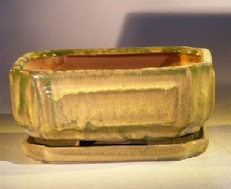 Bonsai Boy's Green Ceramic Bonsai Pot - Rectangle Professional Series with Attached Humidity Drip tray 8 5 x 6 5 x 3 5