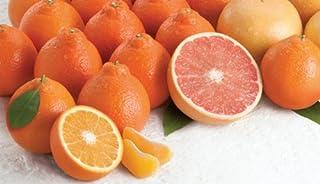 Rare Florida Honeybell Oranges Honeybell Tangelos AND Ruby Red Grapefruit Grove Fresh 15lbs