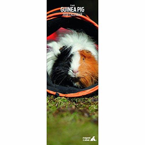 Kalender 2018 Meerschweinchen - Guinea Pig - Slimline-Kalender - Magnet & Steel
