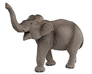 Safari Ltd. Wild Safari Wildlife Asian Elephant Realistic Hand Painted Toy Figurine Model Quality Construction from Safe and BPA Free Materials for Ages 3 and Up