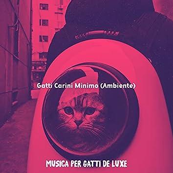 Gatti Carini Minimo (Ambiente)