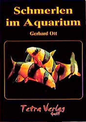 Schmerlen im Aquarium