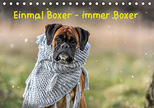 Einmal Boxer - immer Boxer (Tischkalender 2021 DIN A5 quer)