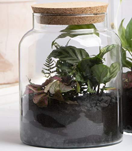 Esschert Design Halboffene Terrarium Flasche Glas 5L Pflanzen Deko Gewächs Haus Blumen Kork Haus